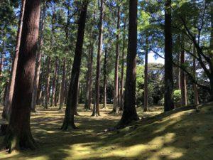 城ぶら「飫肥城」!島津・伊東の因縁を鎮める飫肥杉の木立