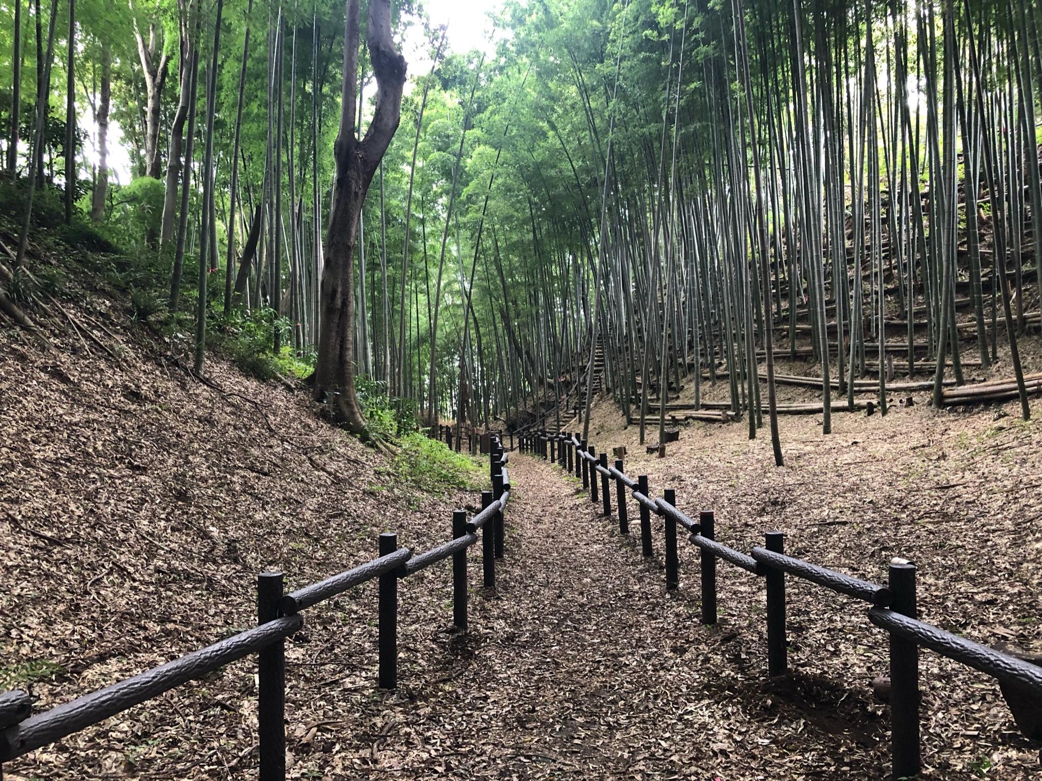 城ぶら「小机城」!空堀好きにはたまらない…横浜の戦国城址